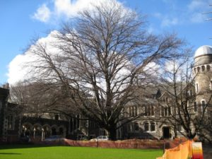 Christchurch trees 2